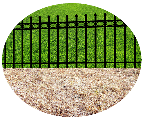 What Side of the fence? We make our own choices....